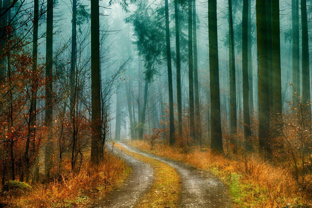 Sentier de forêt en automne